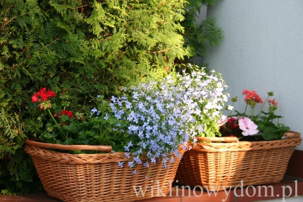 Kwiaty W Koszach Z Wikliny Polska Wiklina