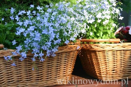 Kwiaty w koszach z wikliny