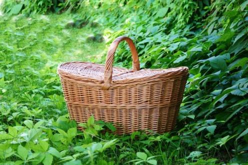 Winston kosz piknikowy