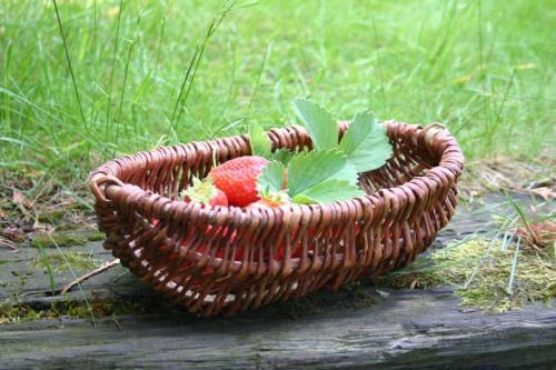 Koszyk na truskawki