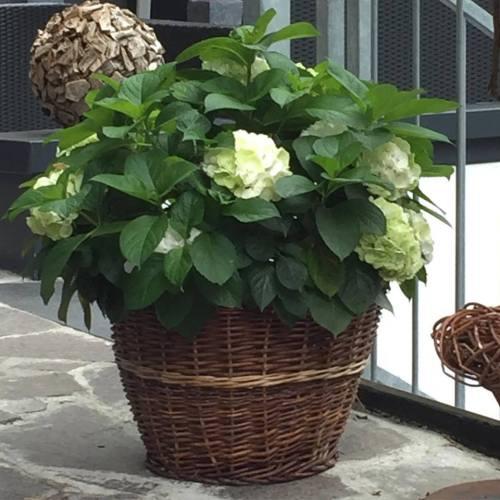 Kwiaty w koszyku wiklinowym