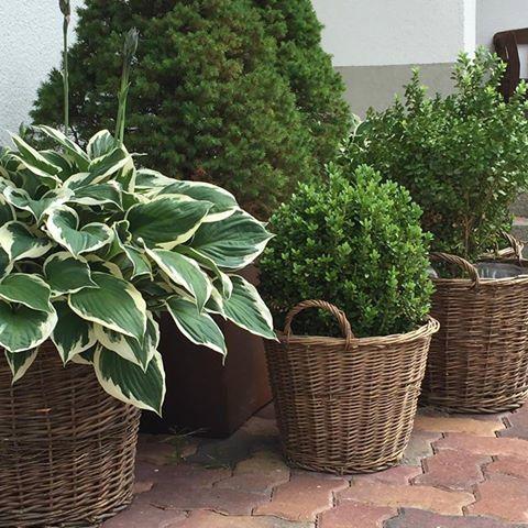 Rośliny w koszach wiklinowych
