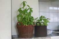 Wiklinowe koszyki na zioła. Wiklinowy Dom